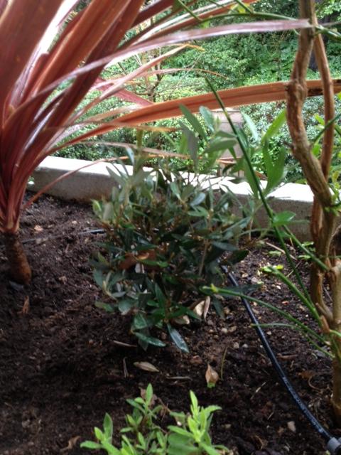 petit-olivier-sur-la-terrasse1