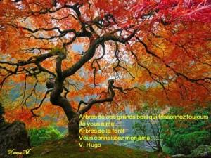 L'automne au coin du bois dans 2013 automne-v.hugo_-300x225